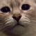 Thomas Hiki's avatar