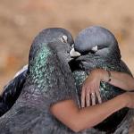 PigeonBreak