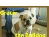 Bulldog180