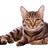 Snelstaart's avatar