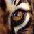 Tiger GirlXD