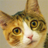 El Taco Miner's avatar