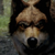 Wolf1313