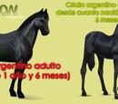 Razas de Caballow: Criollo Argentino