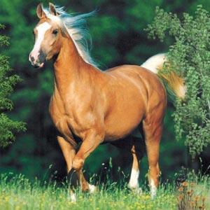 Ficheiro:Cavalos-fotos-p.jpg