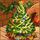 Christmastreehelpfriend