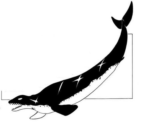 File:Basilosaurus.png