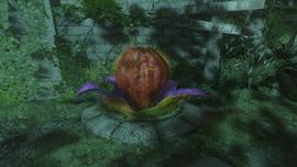 Nasiono zwykla roslina
