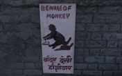 Beware of monkey