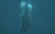 Rusalka sinking Redemption BO