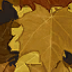 Autumn Camouflage CoDG