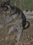 Jumpingdog