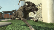 Dog2 BOII
