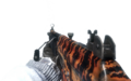 Galil Tiger BO.png