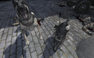 Two dogs with C4 MW3