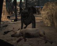 Hyena eating Back on the Grid MW3