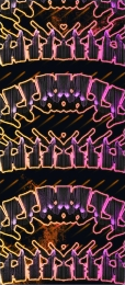 Позвоночная ловушка иконка