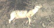 Dead Goat Village MW3