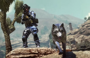 GoldRush Wolf Pack CoDG