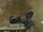 М61 Вулкан