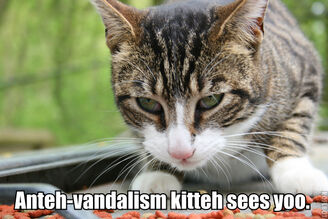 PERSONAL EviHard Anteh-vandalism kitteh lolcat