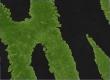 Зеленый тигр иконка