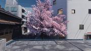 Sakura tree cod iw