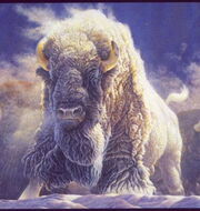 Great-white-buffalo