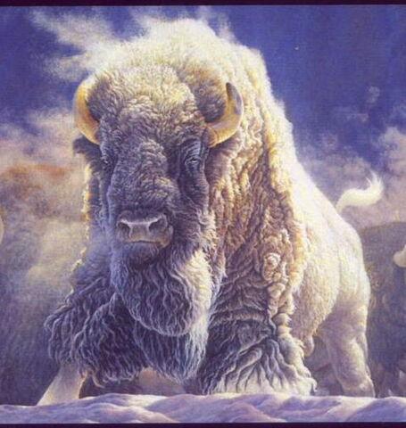 File:Great-white-buffalo.jpg