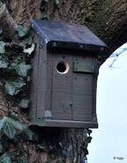 Ivy's Tree's Bird House
