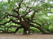 Ivy's Tree Pic 3