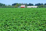 Strawberryfields