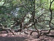 Ivy's Tree Pic 4