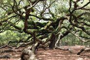 Ivy's Tree Pic 5
