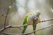 Love birds by toxic designs redux-d3ebfxs