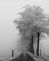 Into the fog by la vita a bella-d4m2sjg