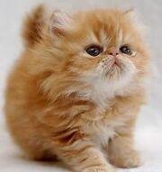 ALJ's Kitten