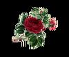 Flower Graphics Gullica Rose