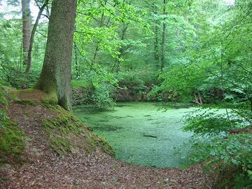 Forest pond by polo2