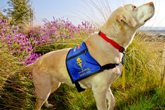 Armstrong-service-dog