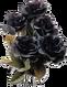 AlchemyBLACK-ROSES-CLRDwhite