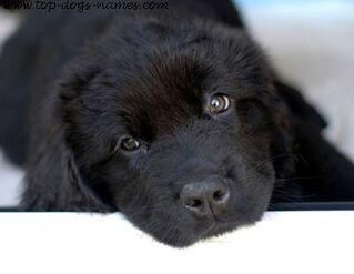2-black-dog