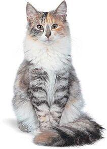 Cat4u