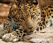 Leopard-digitalART