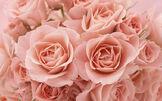 Roses-theme-05-700x437