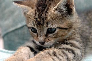 Windyy-kitten