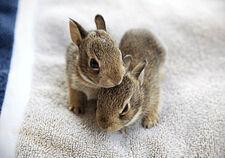 Baby-Bunnies-s