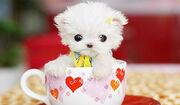 Cute-puppy-l1