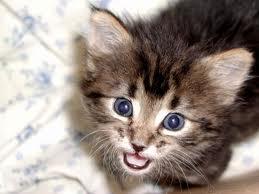Bloom's Kitten