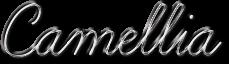 Camellia name